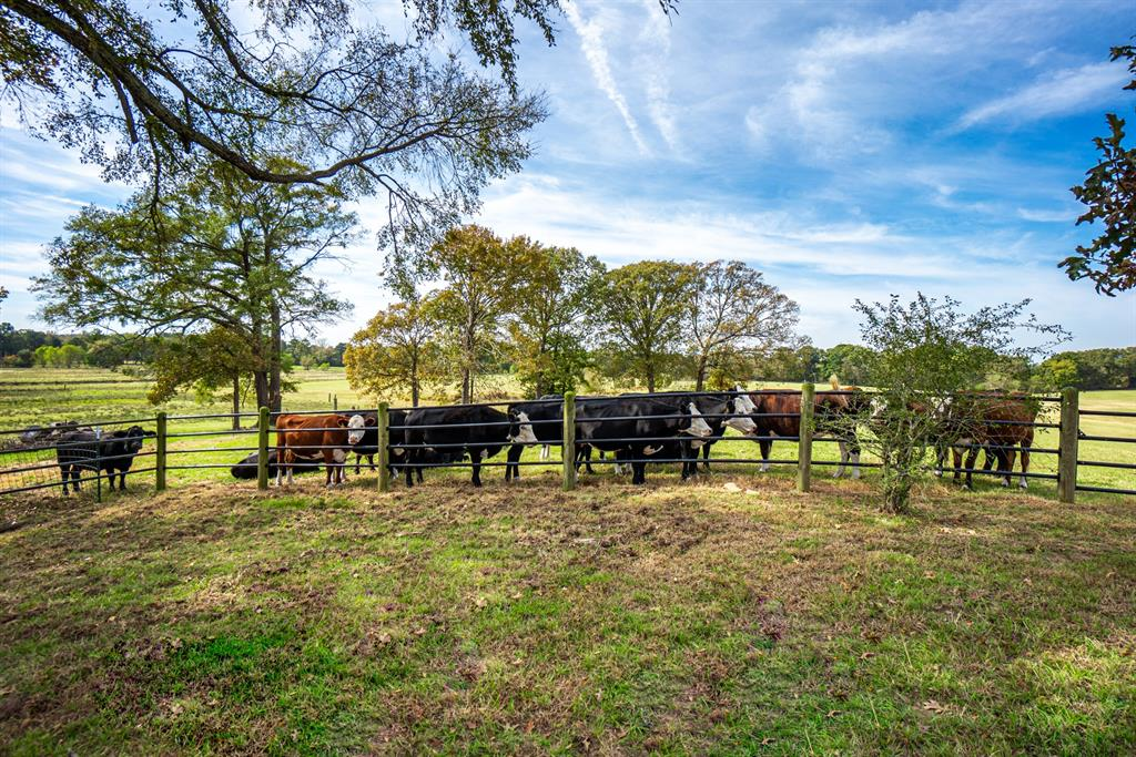 4650 Hwy 144  Daingerfield, Texas 75638 - acquisto real estate best flower mound realtor jody daley lake highalands agent of the year