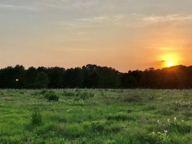 LT 255 Waters Edge  Drive, Larue, Texas 75770 - acquisto real estate best allen realtor kim miller hunters creek expert