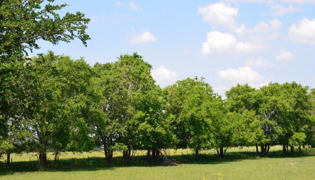 County Rd 3725  Bailey, Texas 75413 - Acquisto Real Estate best frisco realtor Amy Gasperini 1031 exchange expert