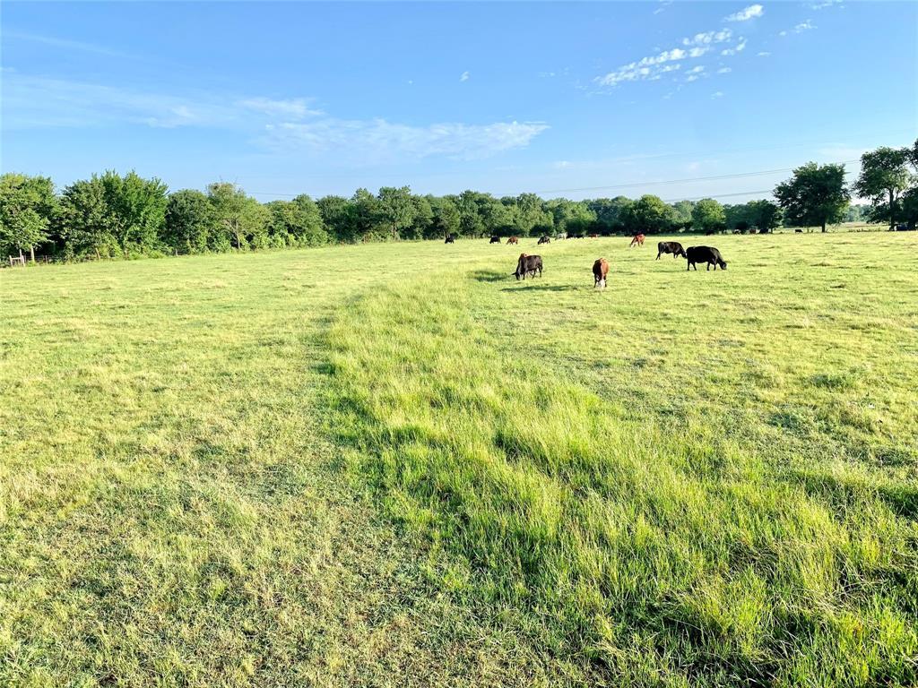 Acreage County Road 1157  Brashear, Texas 75420 - Acquisto Real Estate best frisco realtor Amy Gasperini 1031 exchange expert
