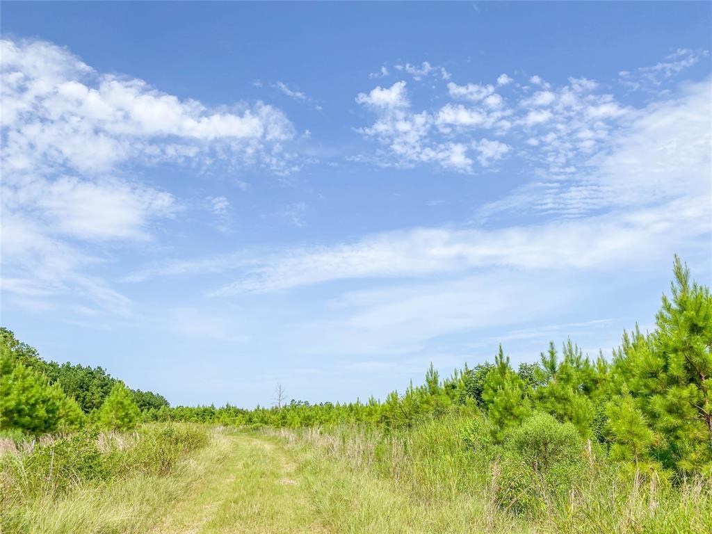 000 Jimbo Nettles Rd  Livingston, Texas 77351 - Acquisto Real Estate best frisco realtor Amy Gasperini 1031 exchange expert