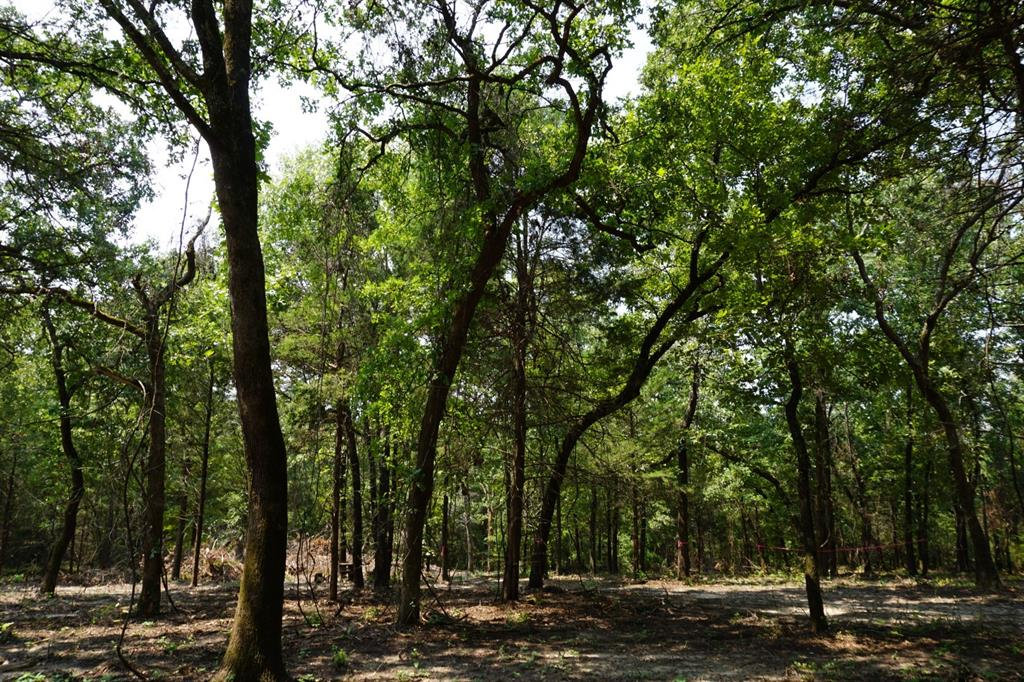 467 County Road 4710  Larue, Texas 75770 - Acquisto Real Estate best frisco realtor Amy Gasperini 1031 exchange expert