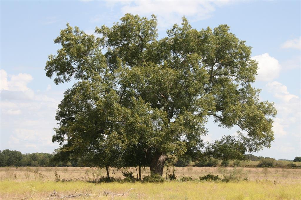 10625 CR 430  Cross Plains, Texas 76443 - Acquisto Real Estate best frisco realtor Amy Gasperini 1031 exchange expert