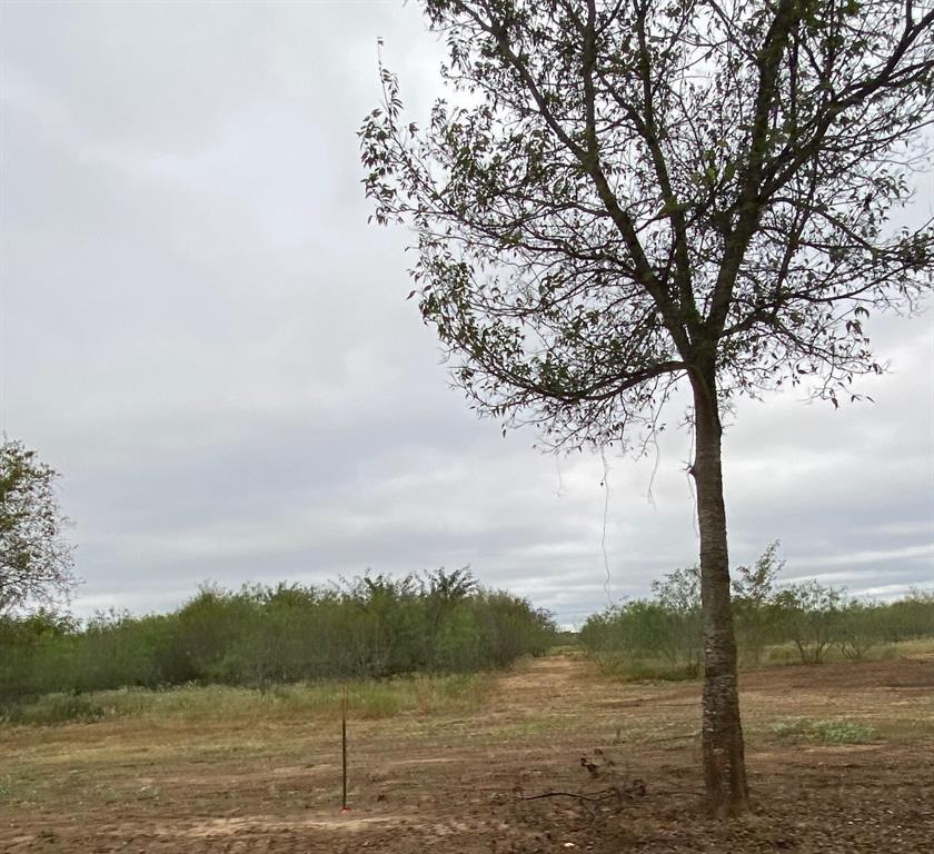 TBD CR 1280  Streetman, Texas 75848 - Acquisto Real Estate best frisco realtor Amy Gasperini 1031 exchange expert